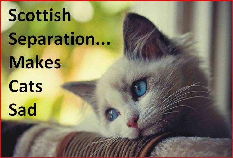 Scottish Separation Makes Cats Sad