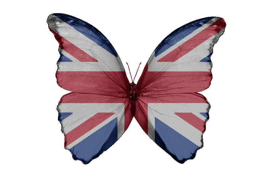 Union Jack Butterfly Awakes